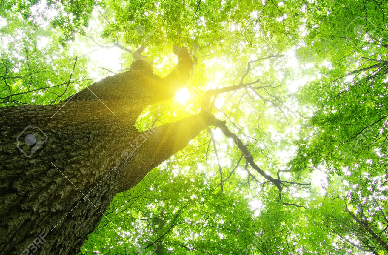 green forest  background in a sunny day Stock Photo - 22767488