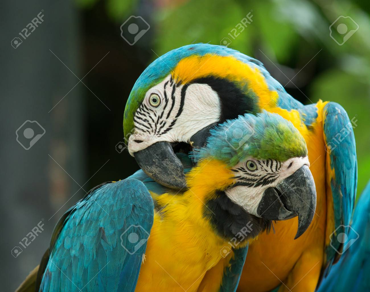 parrot bird sitting on the perch Stock Photo - 22811518