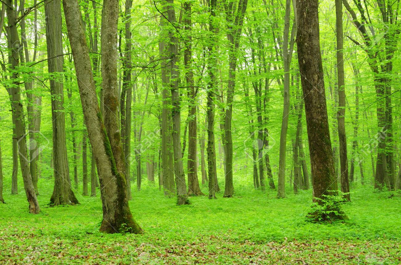 green forest background in a sunny day Stock Photo - 32412849