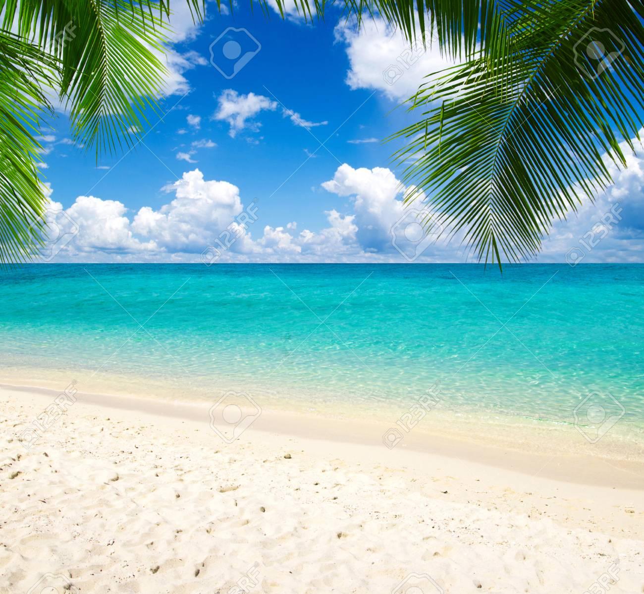 beautiful beach and tropical sea - 33811129