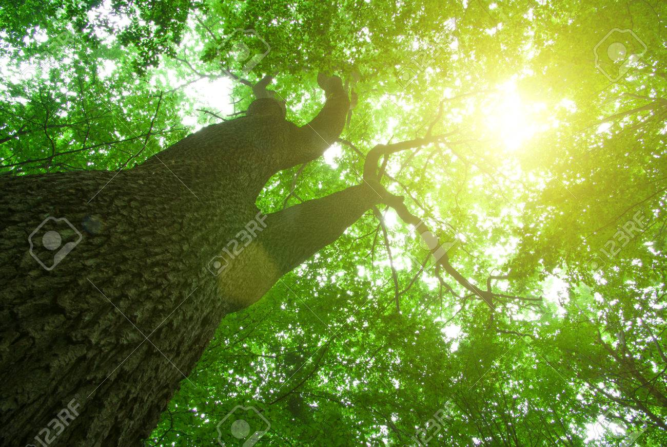 green forest background in a sunny day Stock Photo - 38588023