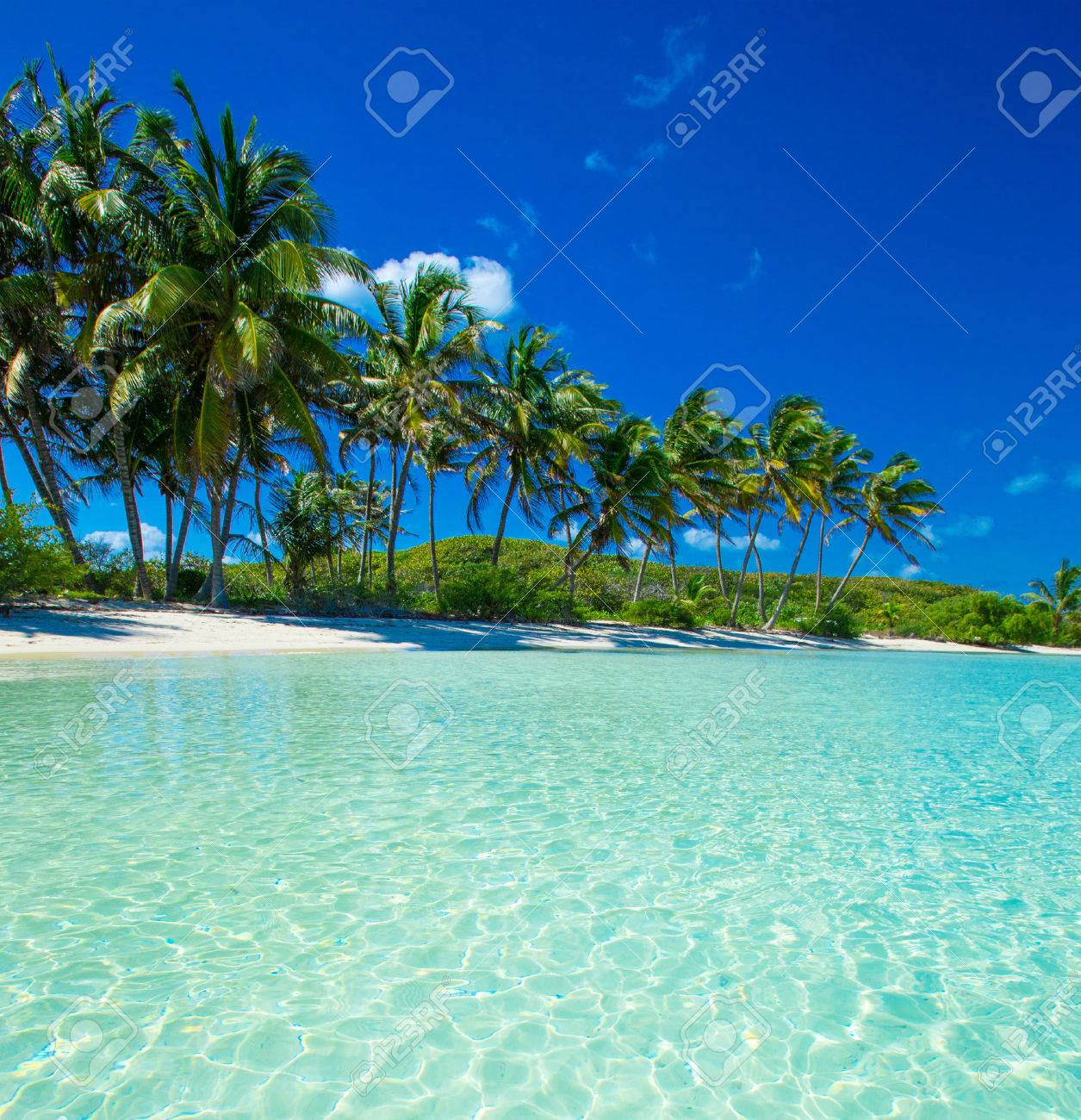 Palm and tropical beach Stock Photo - 39232745