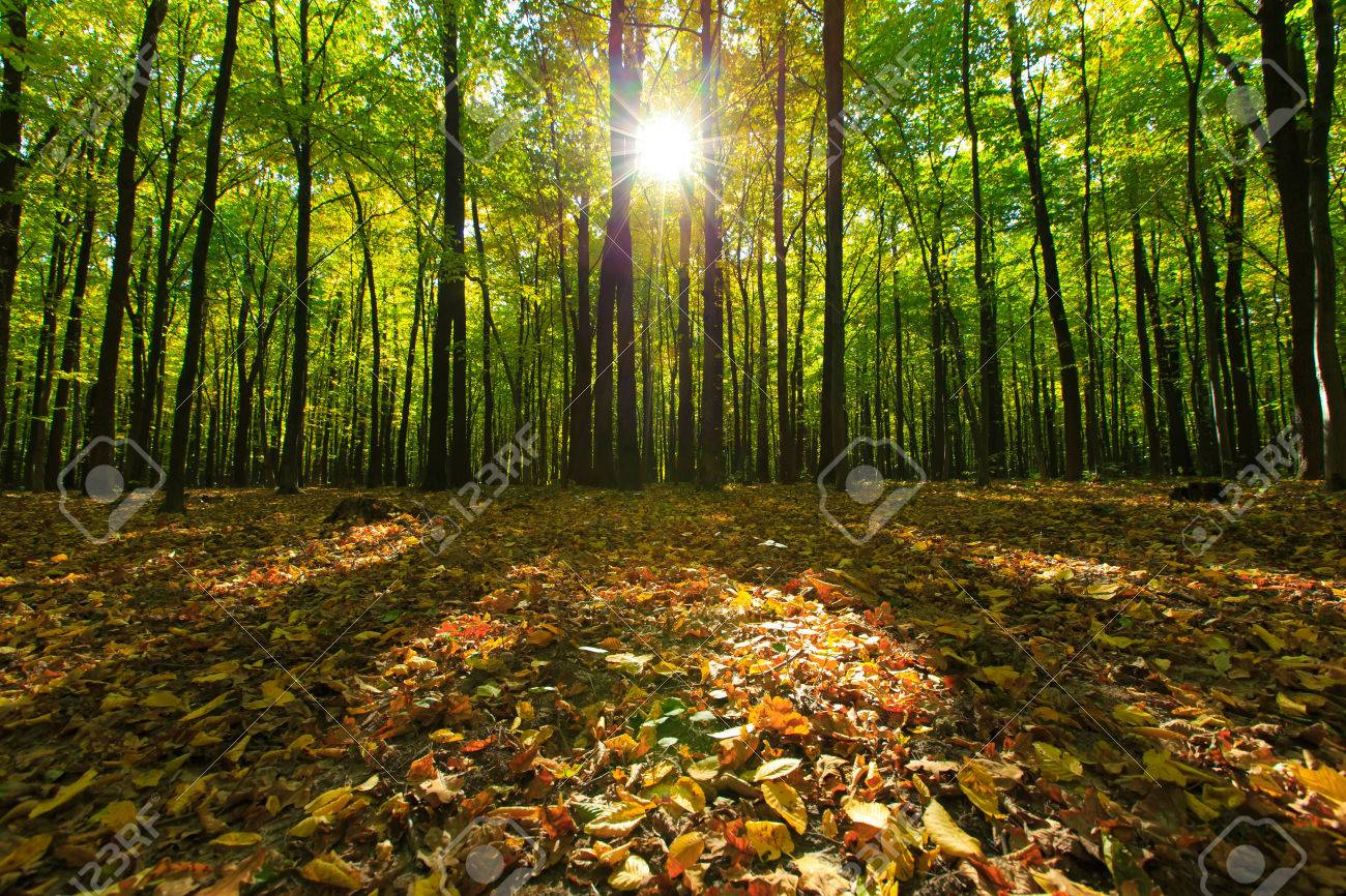 forest trees. nature green wood backgrounds Stock Photo - 39233527