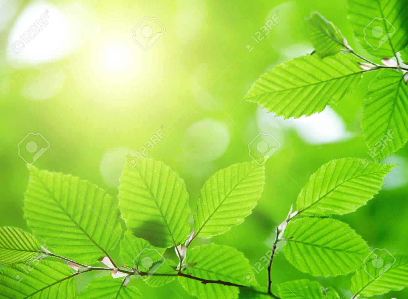 green leaves background in sunny day Stock Photo - 39768911