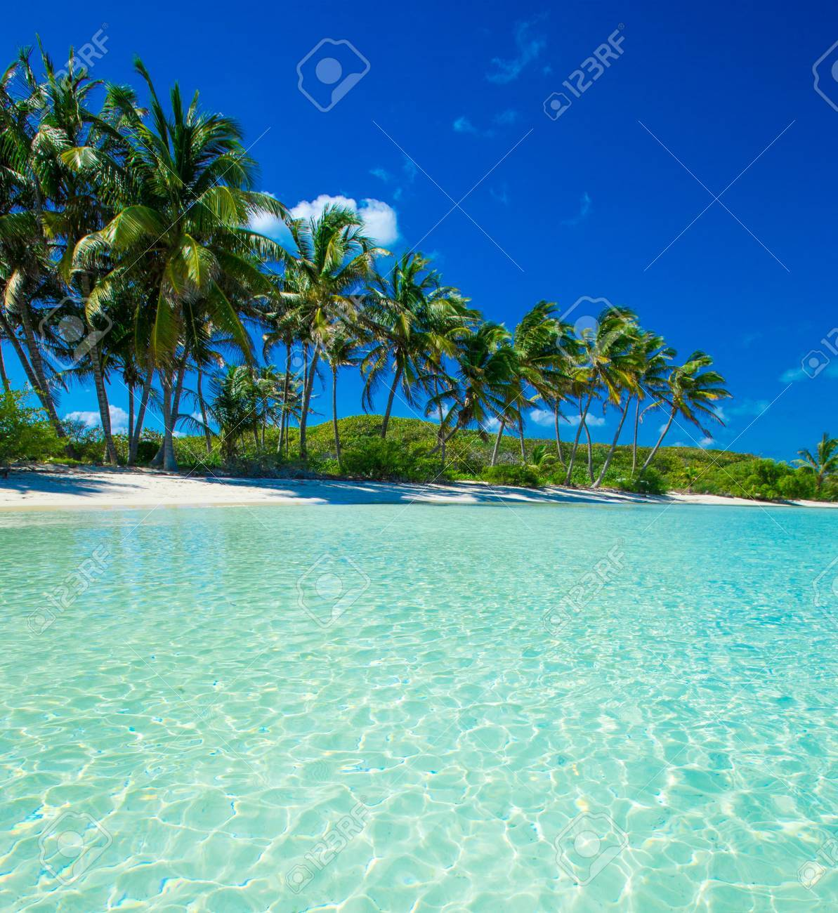 Palm and tropical beach Stock Photo - 39863363