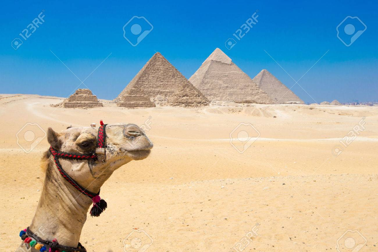 A colorfully saddled camel waits for its owner in front of the pyramids with a beautiful sky of Giza in Cairo, Egypt. Horizontal Stock Photo - 42163465