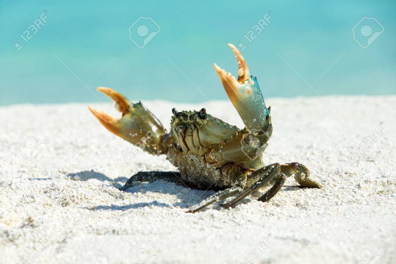 crab on beach ,Tachai island - 43643354