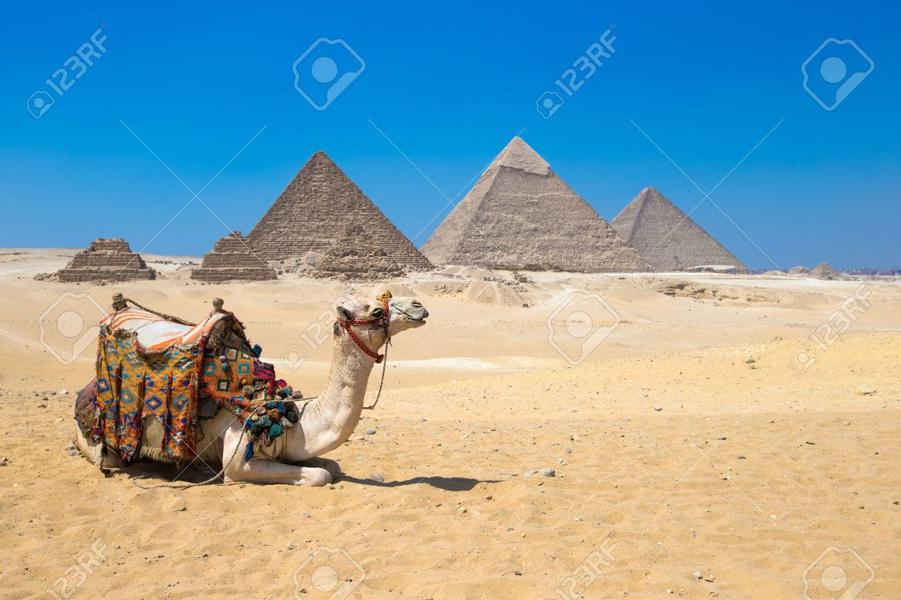 A colorfully saddled camel waits for its owner in front of the pyramids with a beautiful sky of Giza in Cairo, Egypt - 43593948