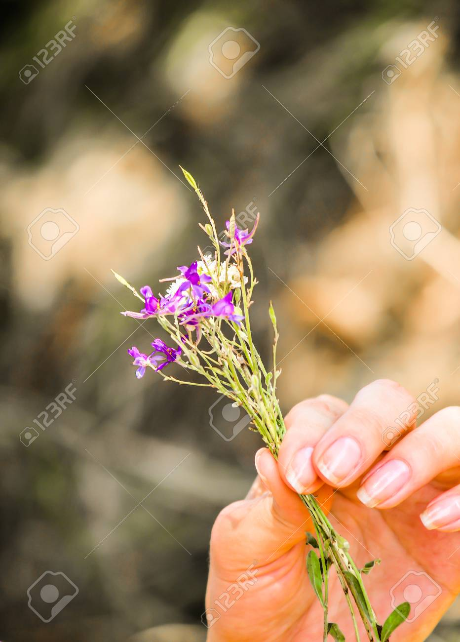 small bunch of flowers in hand stock photo picture and royalty free rh 123rf com small bunch of flowers crossword puzzle clue small bunch of flowers crossword puzzle clue