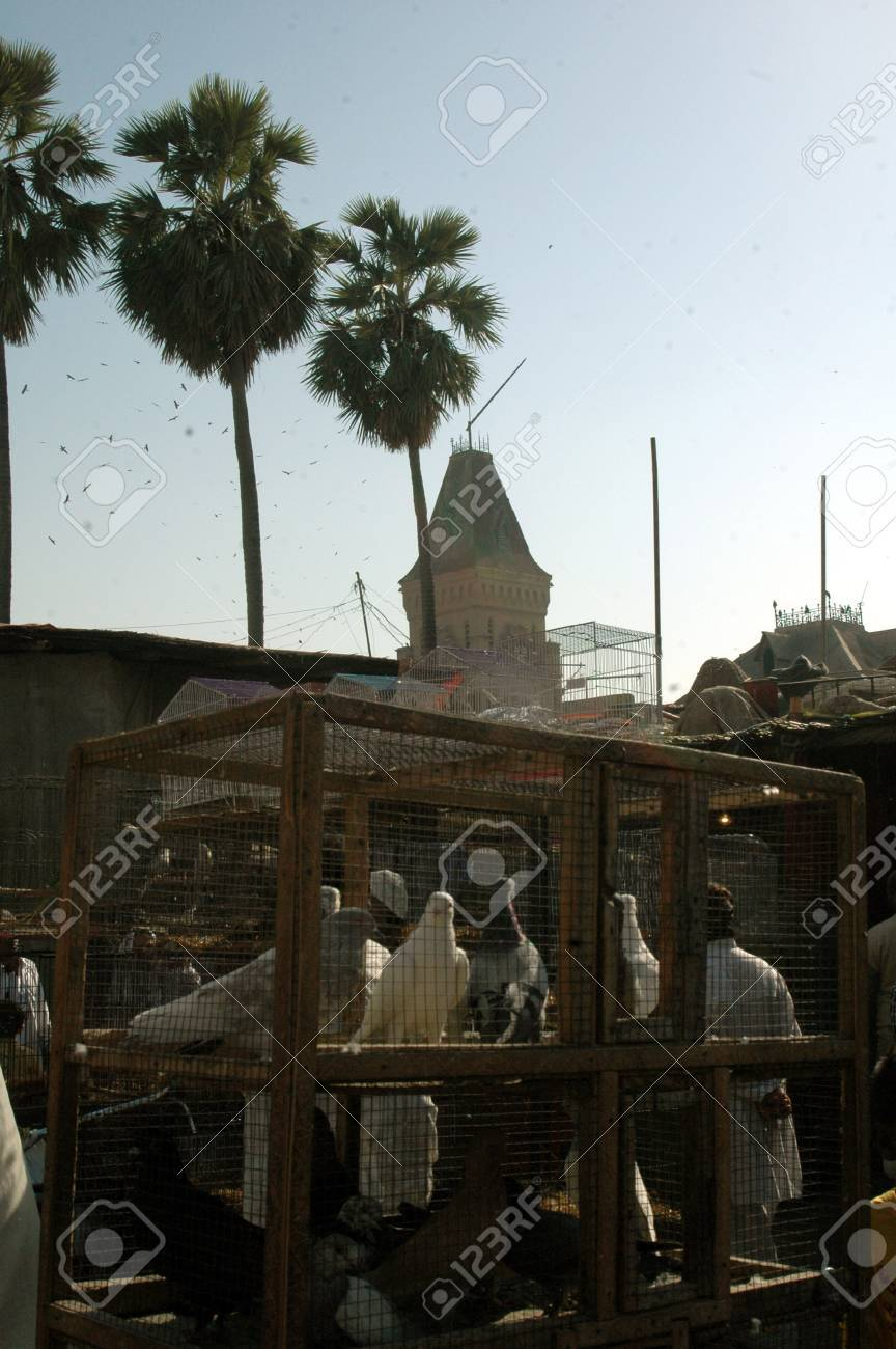 KARACHI/PAKISTAN_ Birds and animal market place at empress market saddar  11 Feb 2013      Stock Photo - 17950601