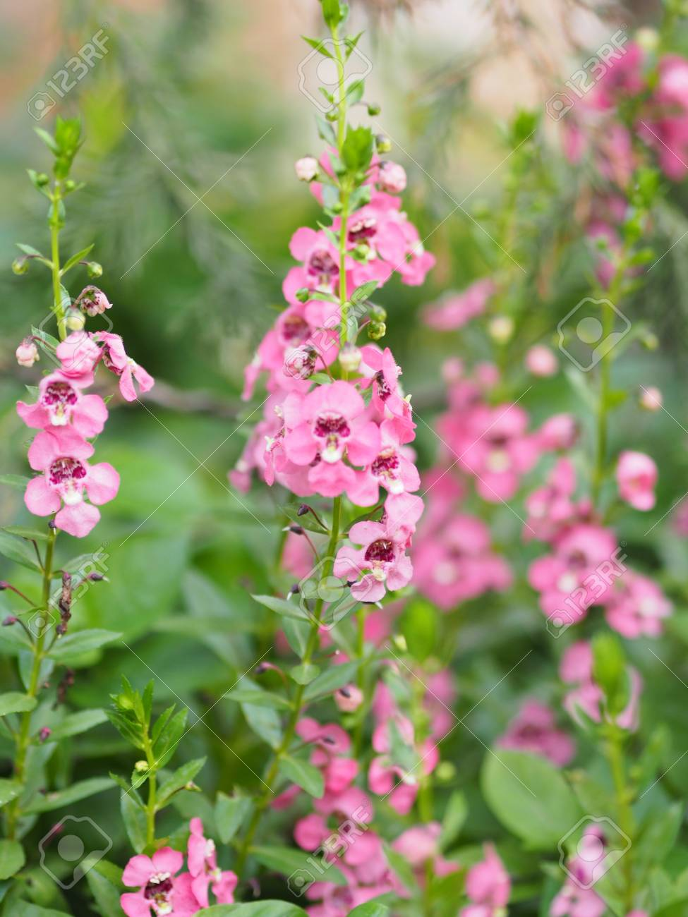Forget Me Not Red Pink Flower Bouquet Beautiful Nature Stock Photo Picture And Royalty Free Image Image 124677873