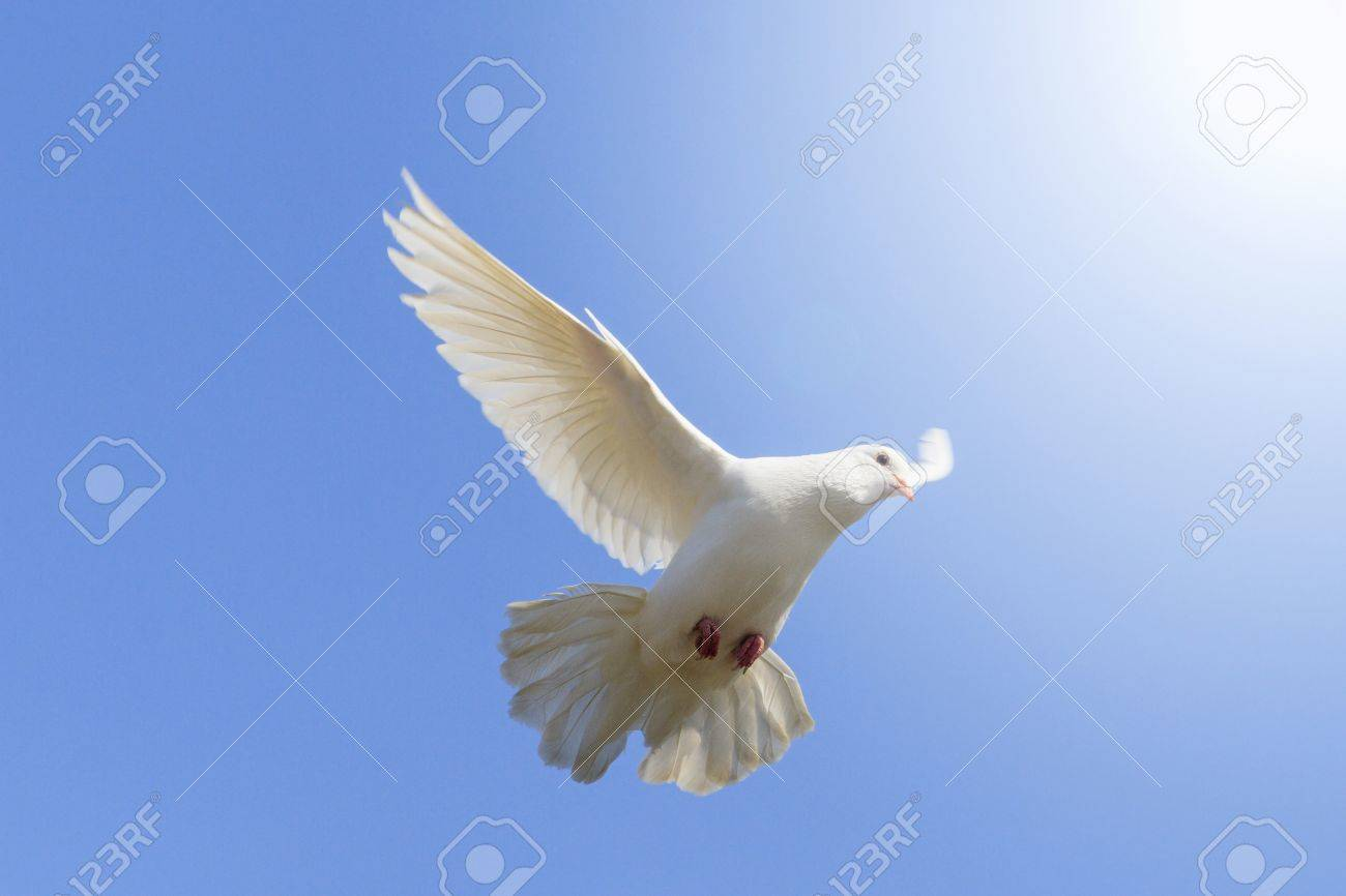 White dove flying on a background of blue sky a symbol of peace white dove flying on a background of blue sky a symbol of peace and harmony buycottarizona Choice Image