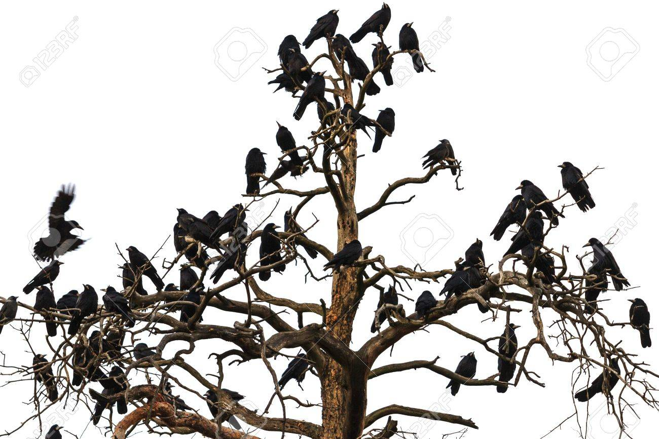 tree which beset crows birds of odin norse mythology sagas