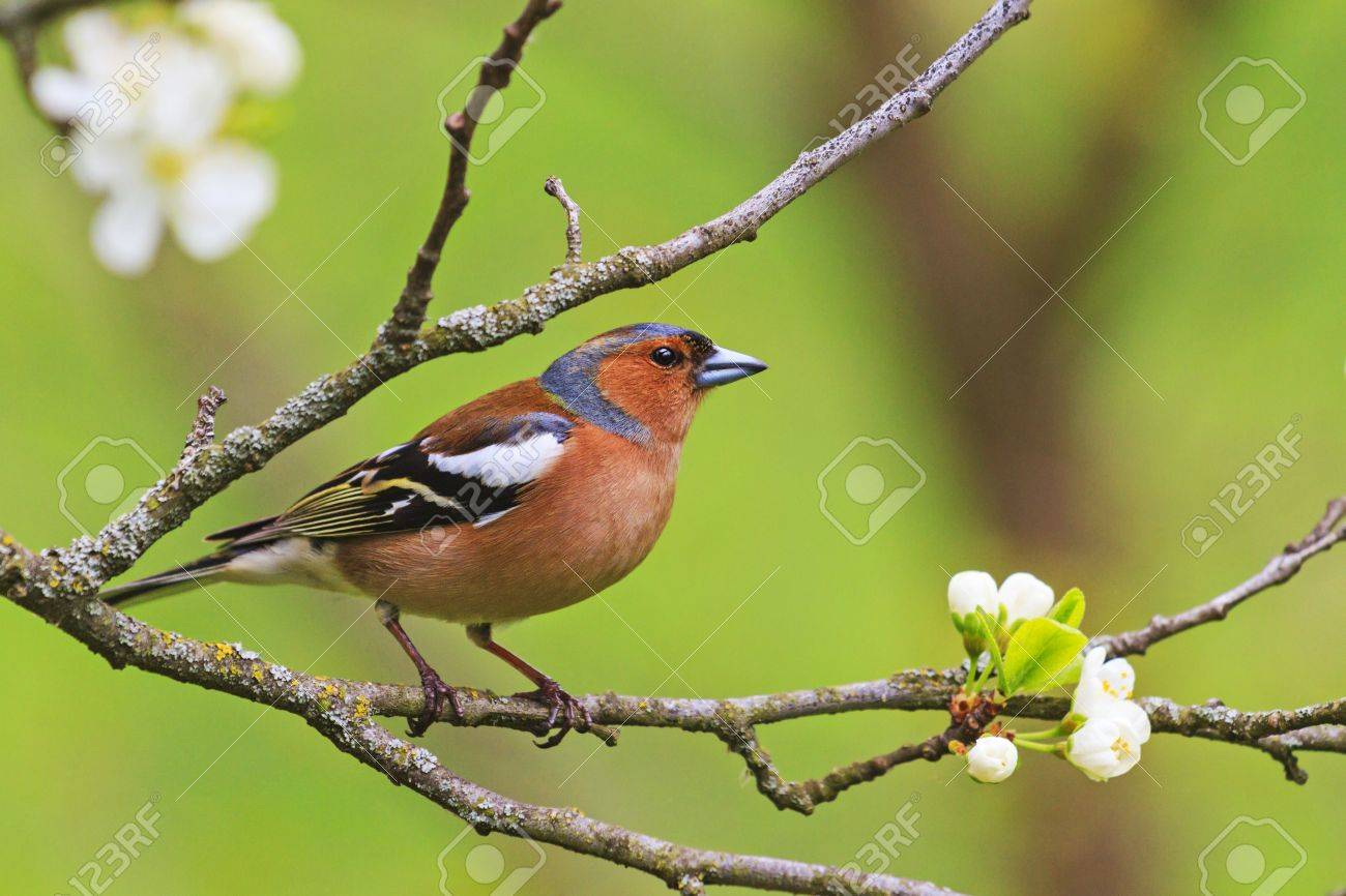 colored songbird sitting on a branch of flowers - 77031728