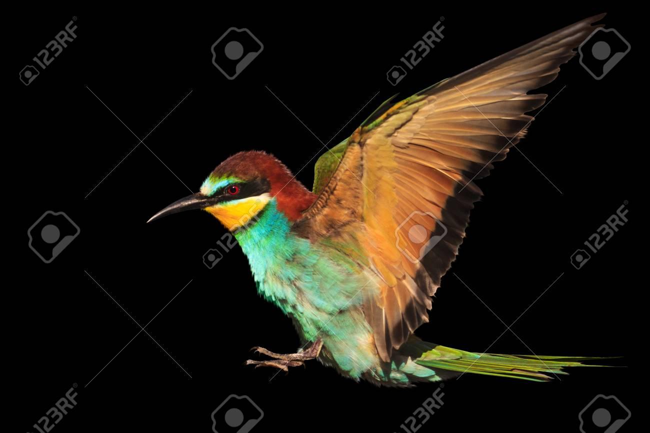 Paradise Bird In Flight Is Isolated On Black Creativity Symbols