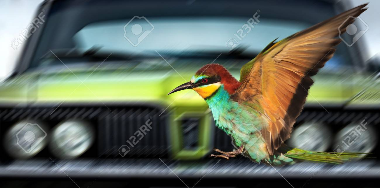 Saving Birds From Cars Creativity Symbols And Signs Stock Photo