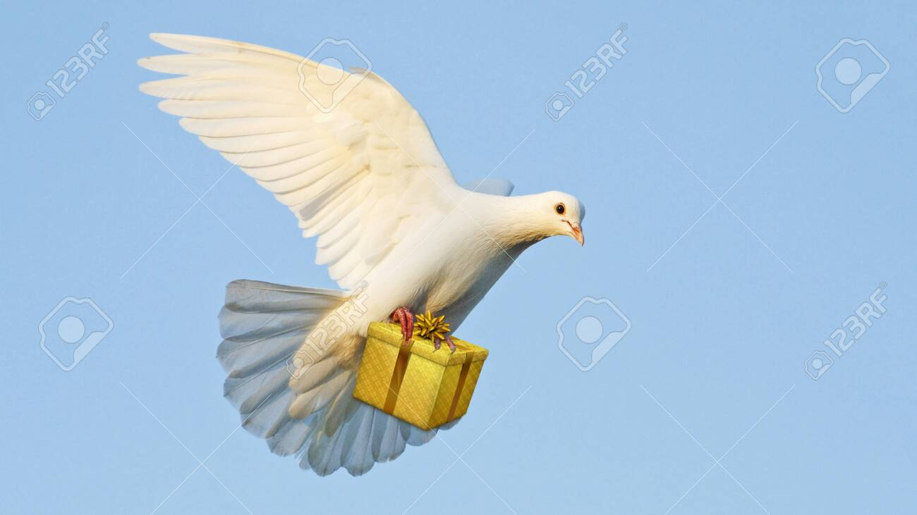 white dove carries a gift for the feast - 134851079