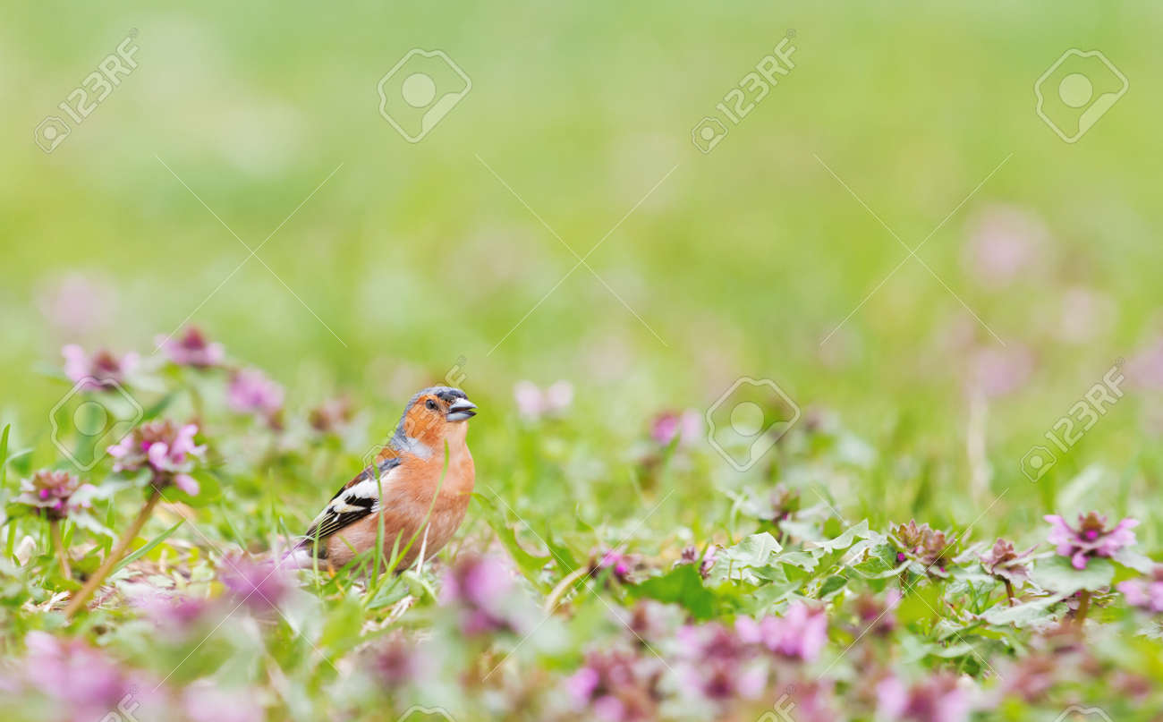 beautiful bird sings a song among spring flowers - 166179050