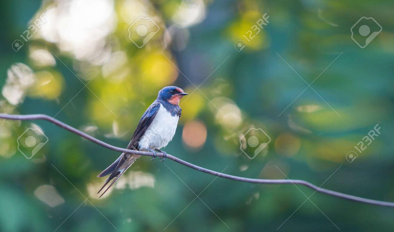 beautiful bird swallow sitting on a wire - 167122009