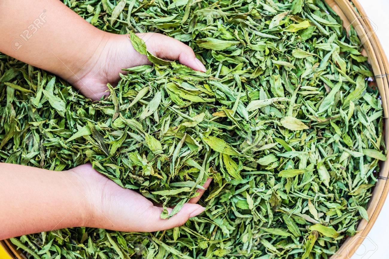 Dried Stevia Rebaudiana Bertoni - Natural sweetener leaf sugar substitute. Stock Photo - 34238008