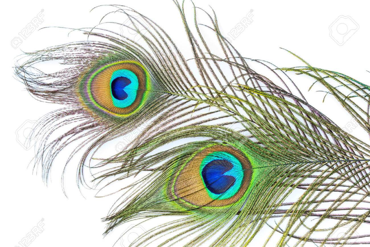 Peacock feathers on white background Stock Photo - 34238442