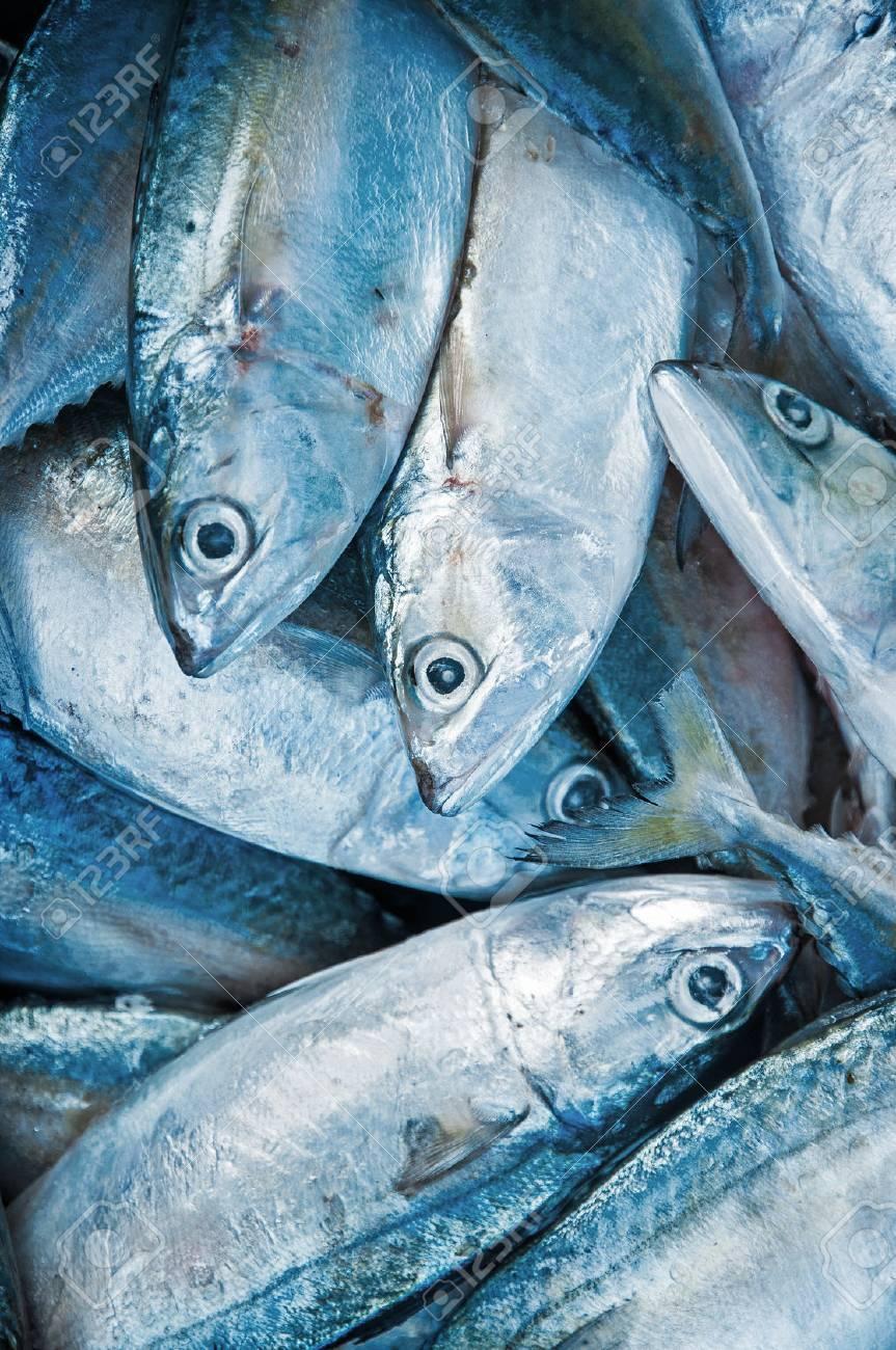 Fresh raw mackerel fish in market. Stock Photo - 37999880