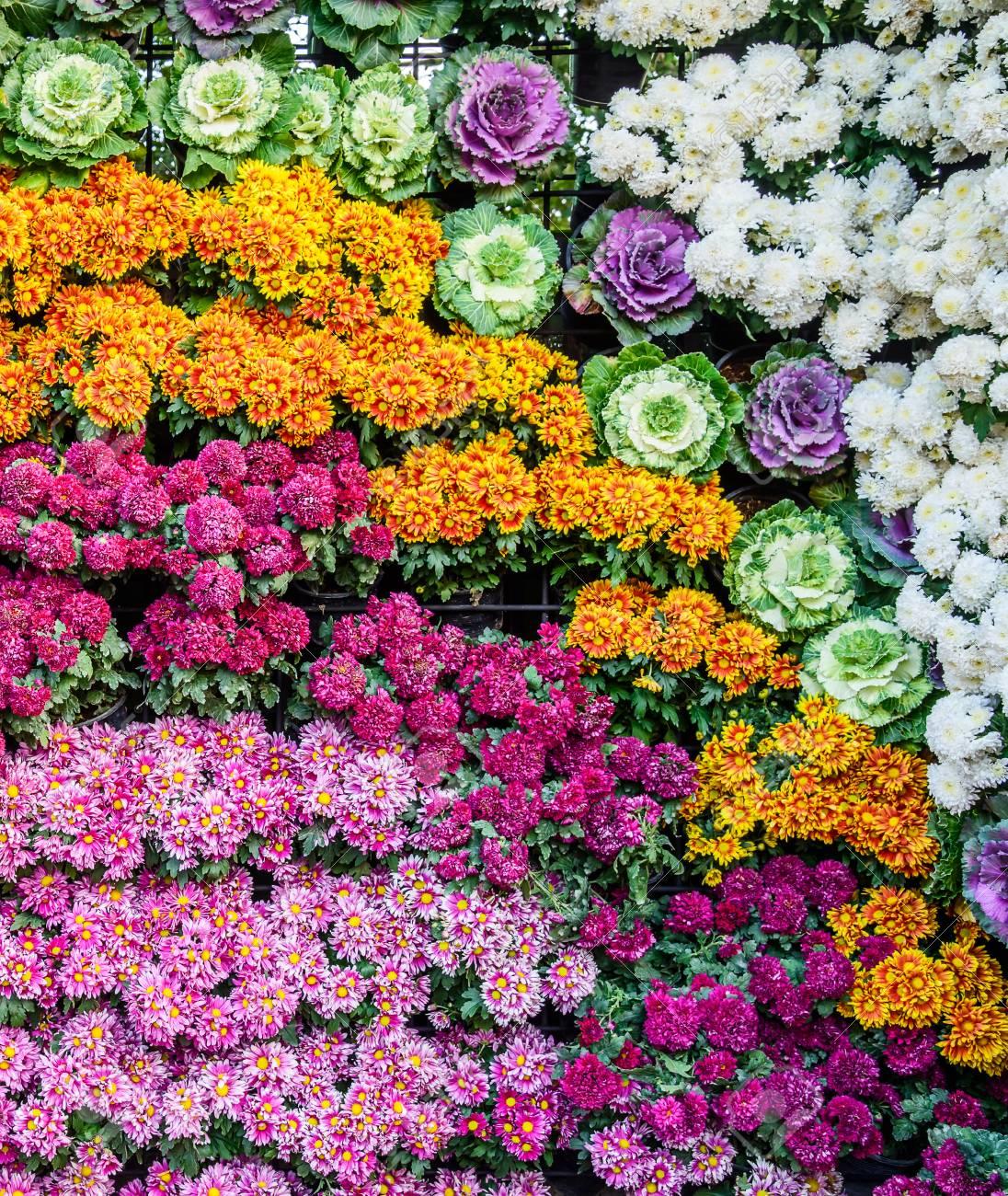Vertikaler Garten Mit Blumen Und Gemüse Hintergrund Der Bunten