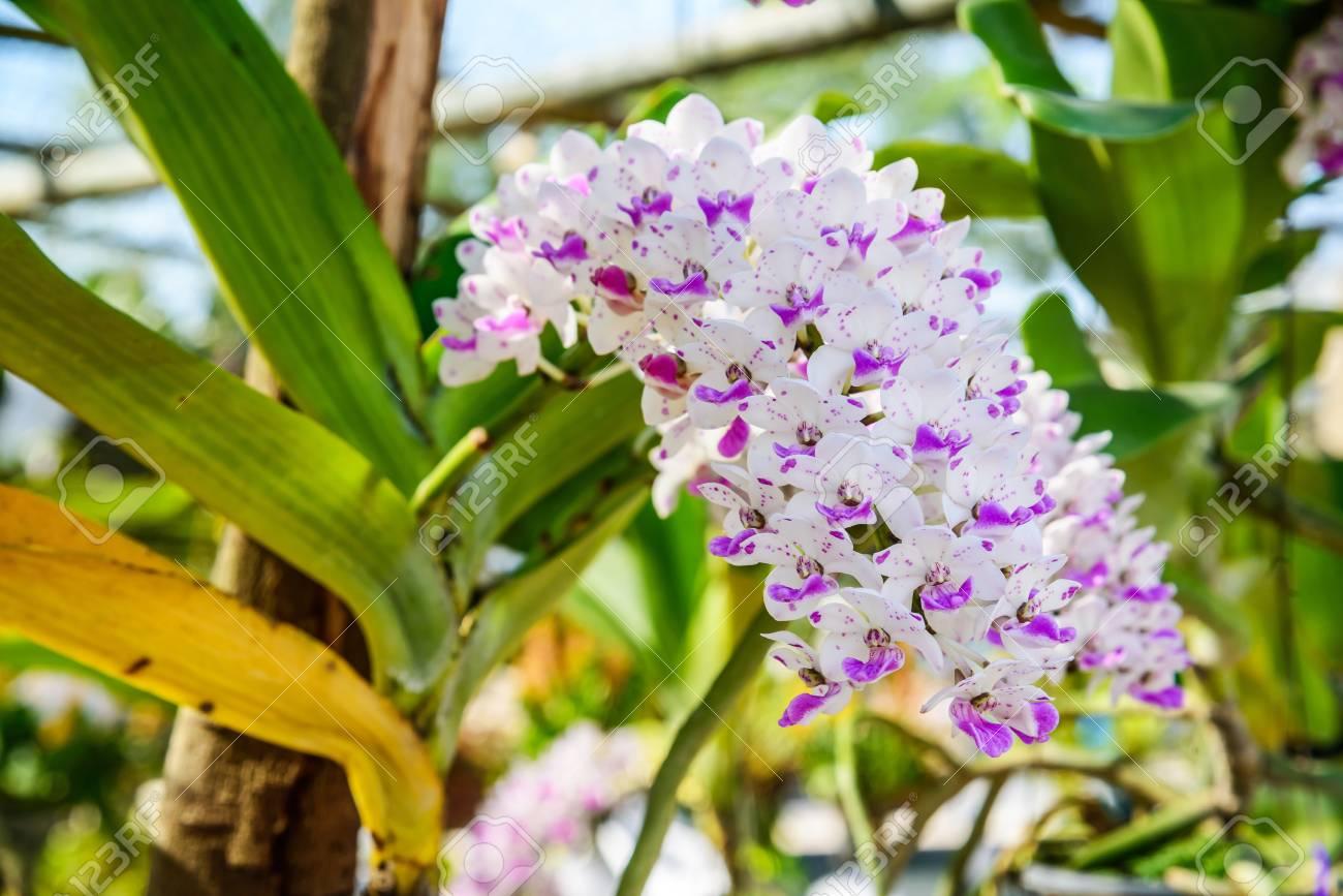 orquídeas blancas y moradas orquídeas blancas y violetas hermosas