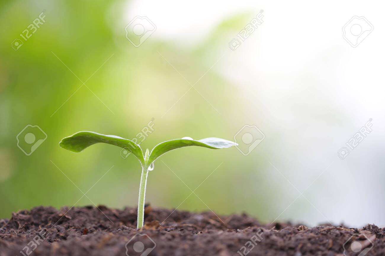 small tree sapling plant planting with dew - 123926003