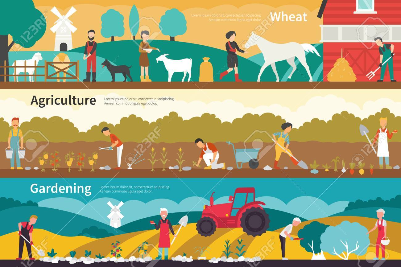 Wheat Agriculture Gardening flat school interior outdoor concept web. Career Chart Fun - 63314543