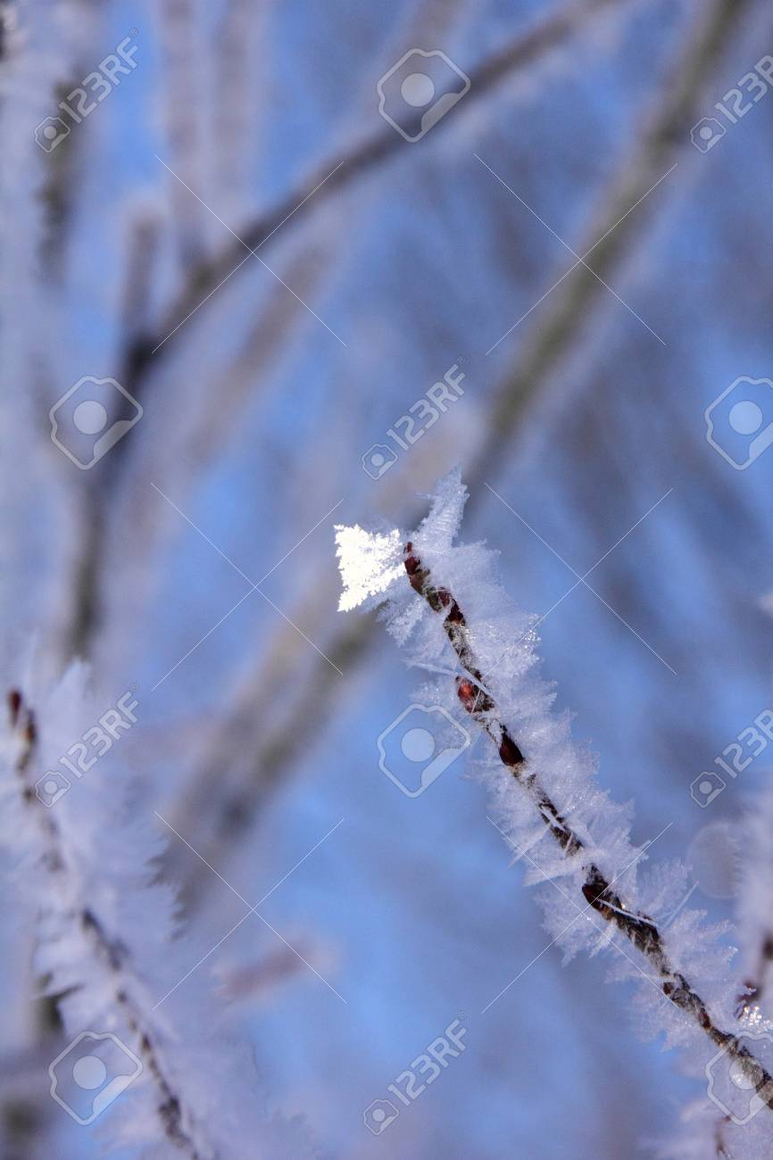 Hoarfrost  Branches of trees Stock Photo - 13164983