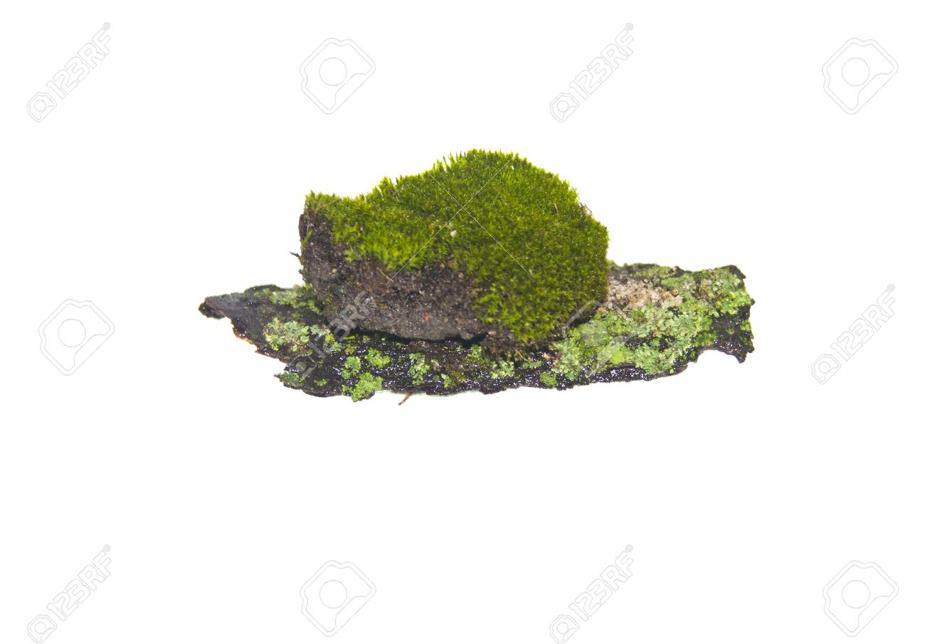 moss isolated on white background - 97653289