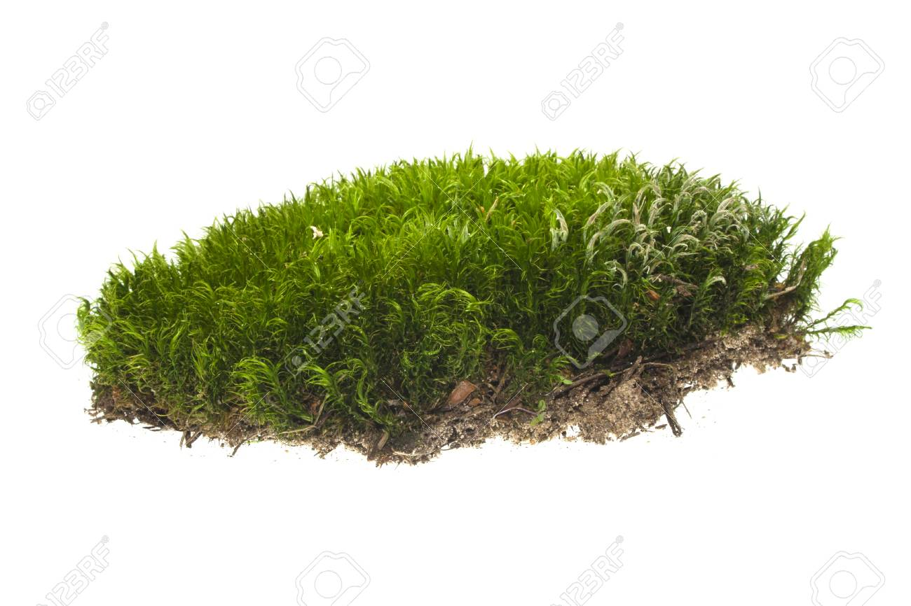 moss isolated on white background - 111164288