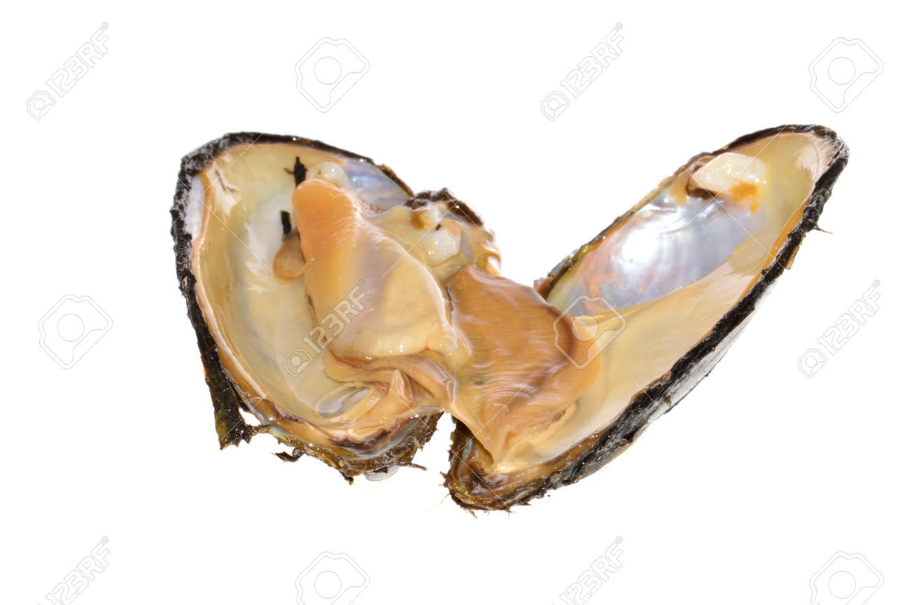 river shell isolated on white background - 171709490