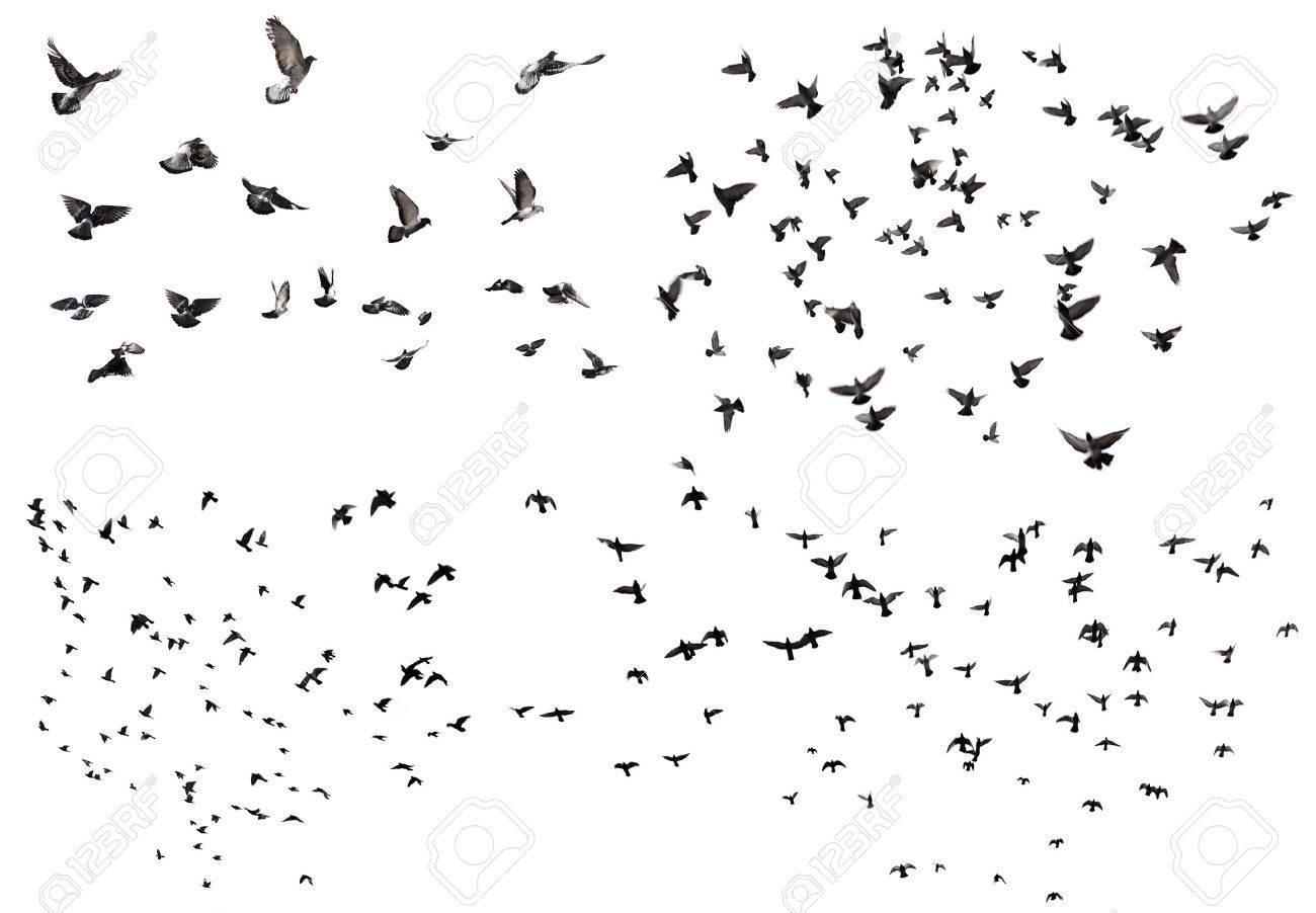 飛ぶ鳥の白で隔離のシルエット