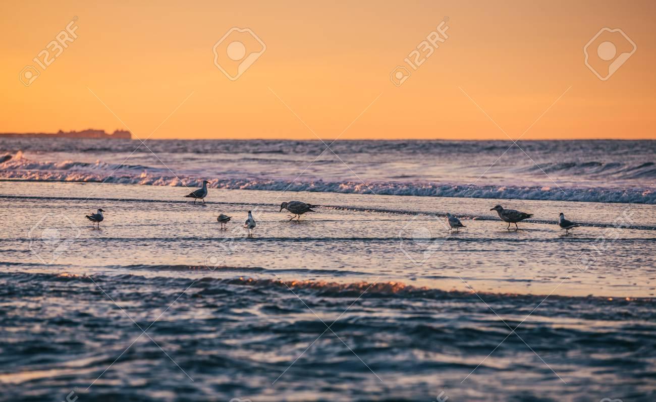 Birds On The Oceanfront Atlantic Ocean Coastline Near New York