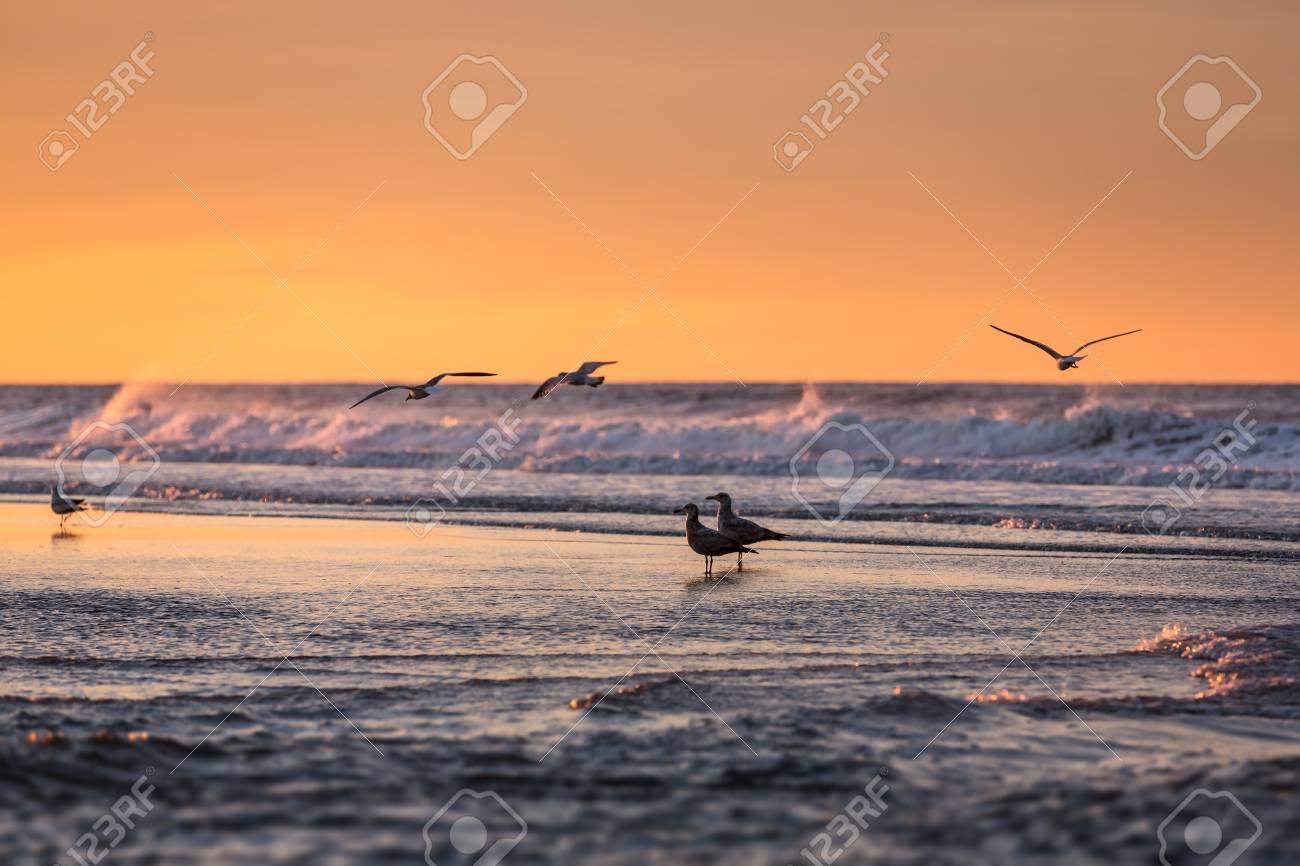 Birds Early Morning On The Oceanfront Atlantic Ocean Coastline