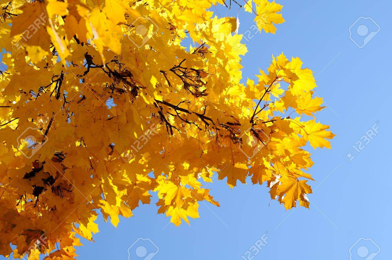 A bunch of fall leaves Stock Photo - 8105957
