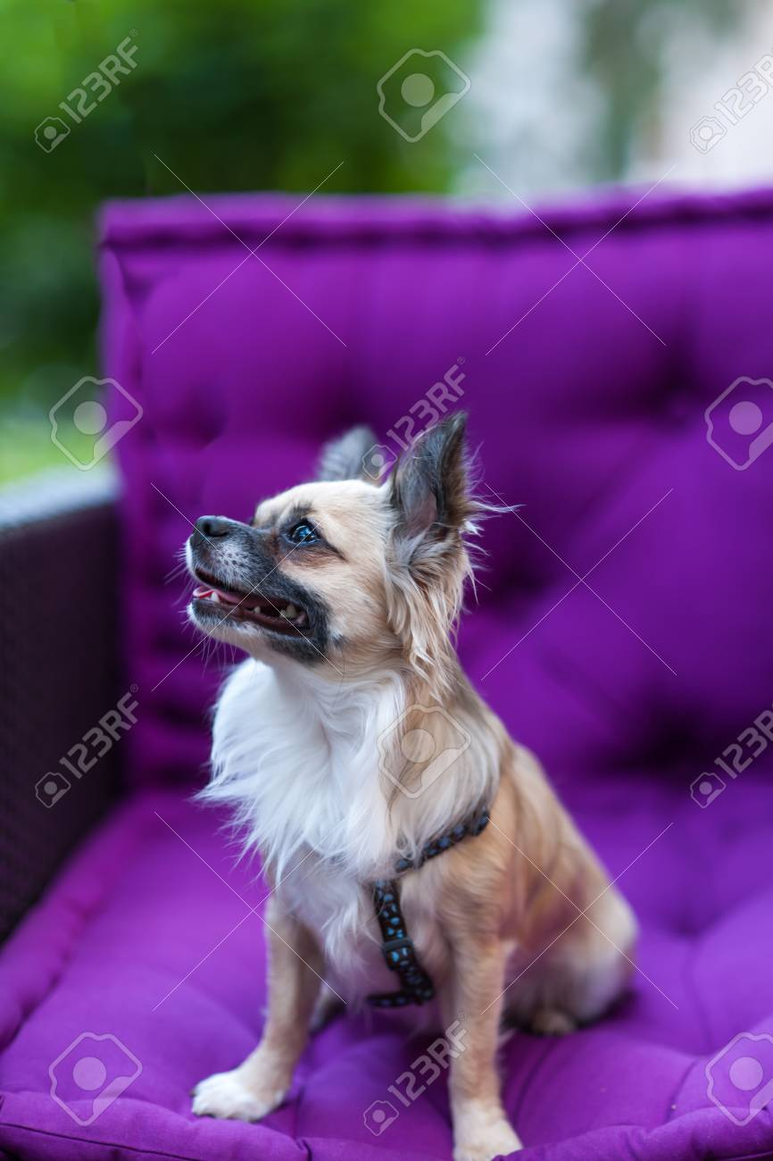 A sweet little dog curiously inspects an unfamiliar environment Stock Photo - 14810424