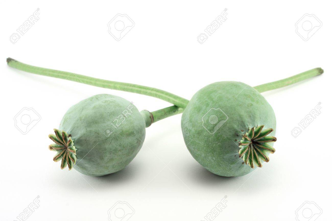 Heads of opium poppy Stock Photo - 9162094