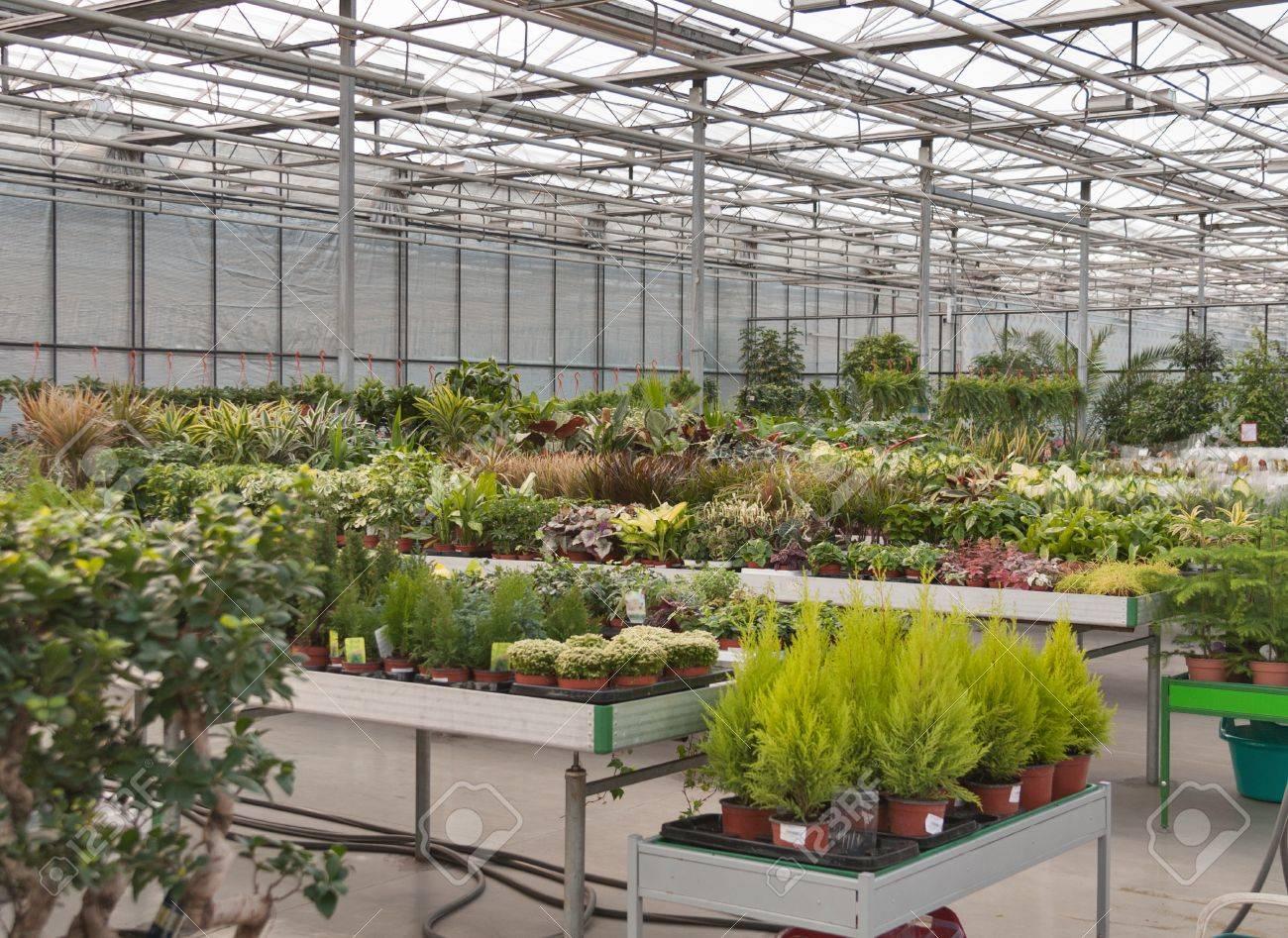 Intérieur Du Magasin Pour La Culture En Serre Et La Vente De Plantes ...