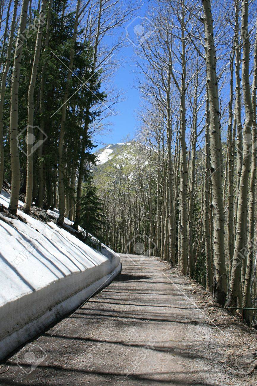 mountain road winds between snowbank and aspen trunks on the way up the San Francisco peaks Stock Photo - 3577889