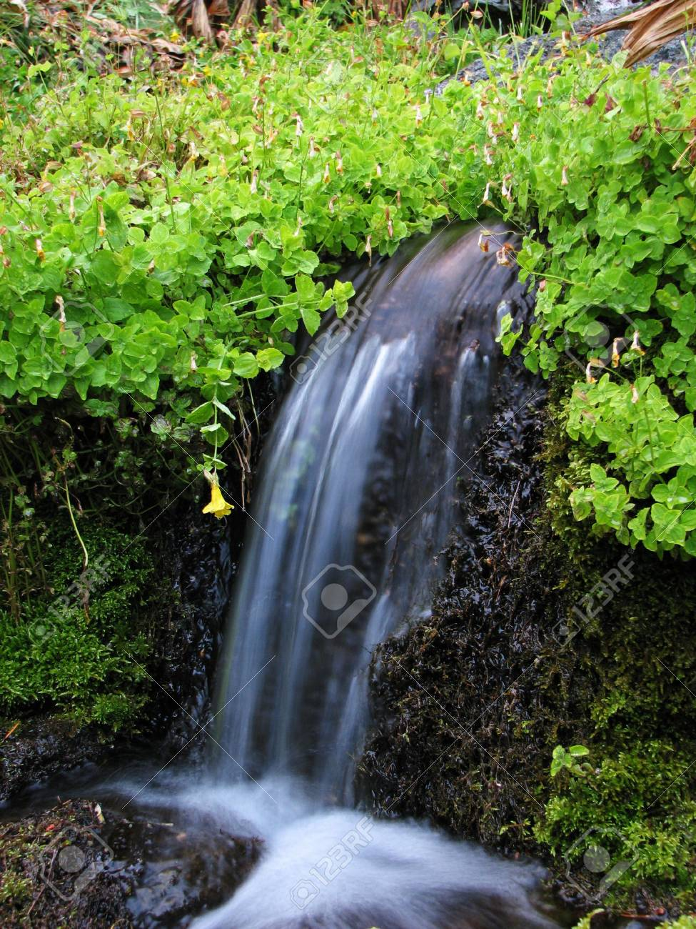 water from a spring falls among green leaves and moss Stock Photo - 3659497