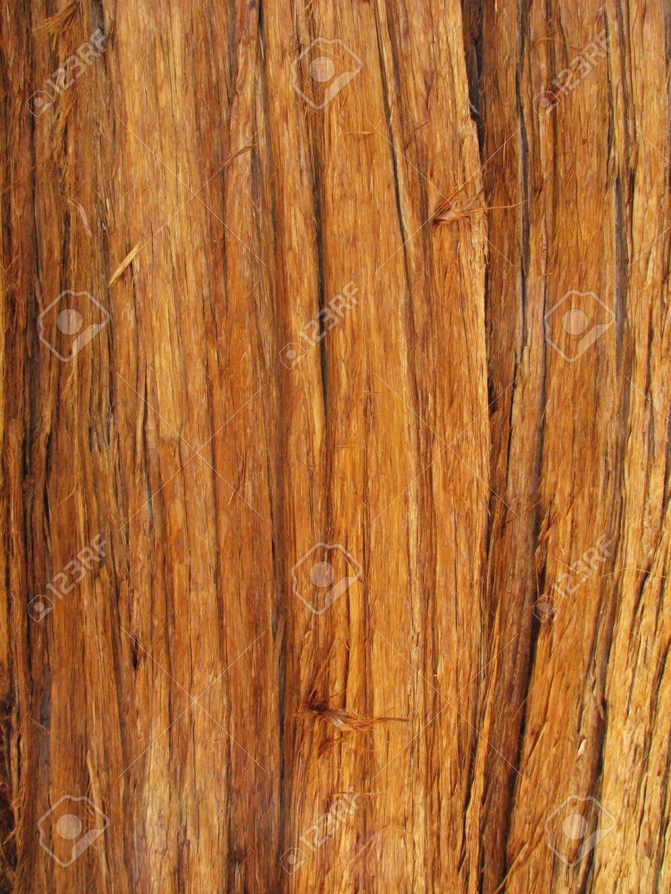 Rot Zeder Stamm Mit Rinde Fur Hintergrund Verwenden Lizenzfreie