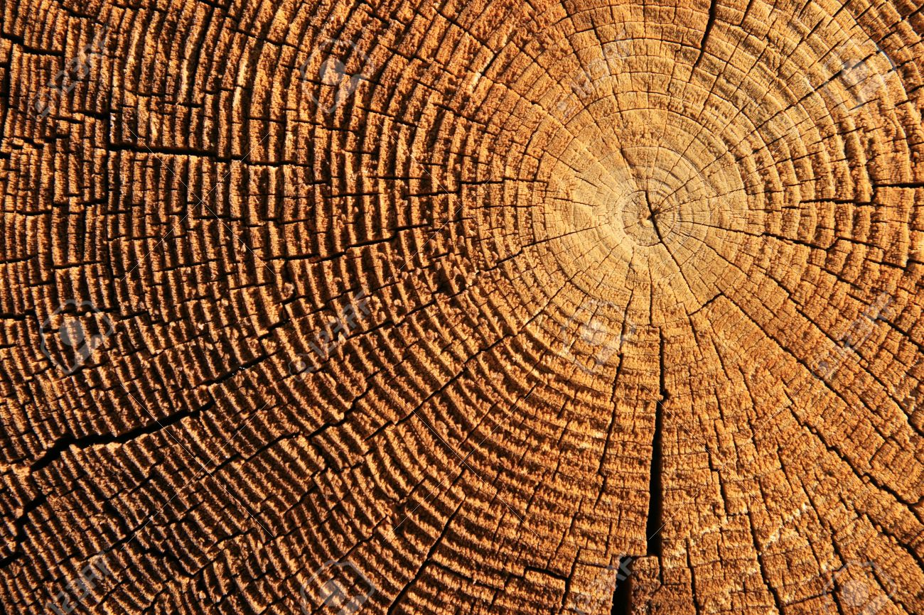 growth rings on the end of a brown sawed log Stock Photo - 5676489