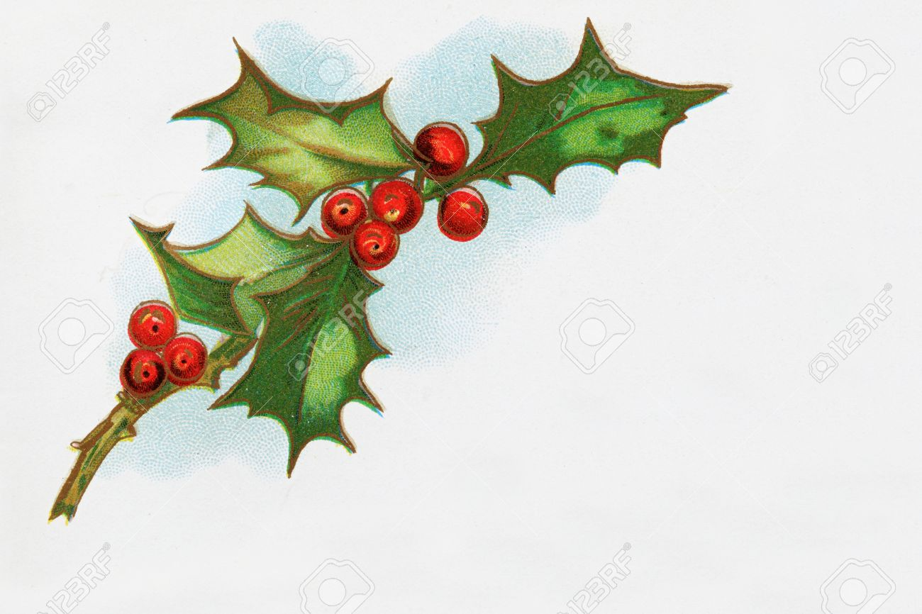 vintage print of holly sprig with leaves and berries from an 1898 book Stock Photo - 8334309