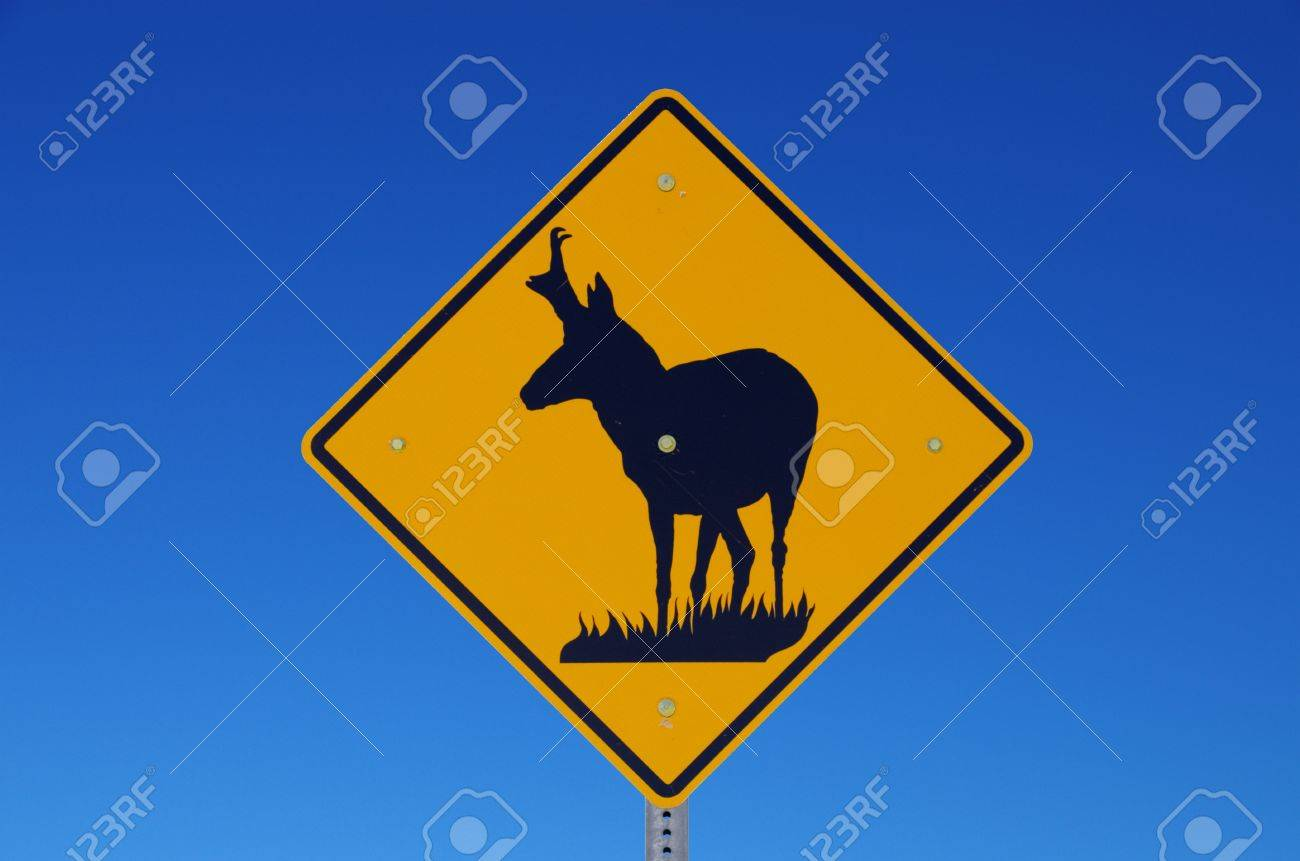road sign warning of pronghorn antelope crossing the road with blue sky background Stock Photo - 19586549
