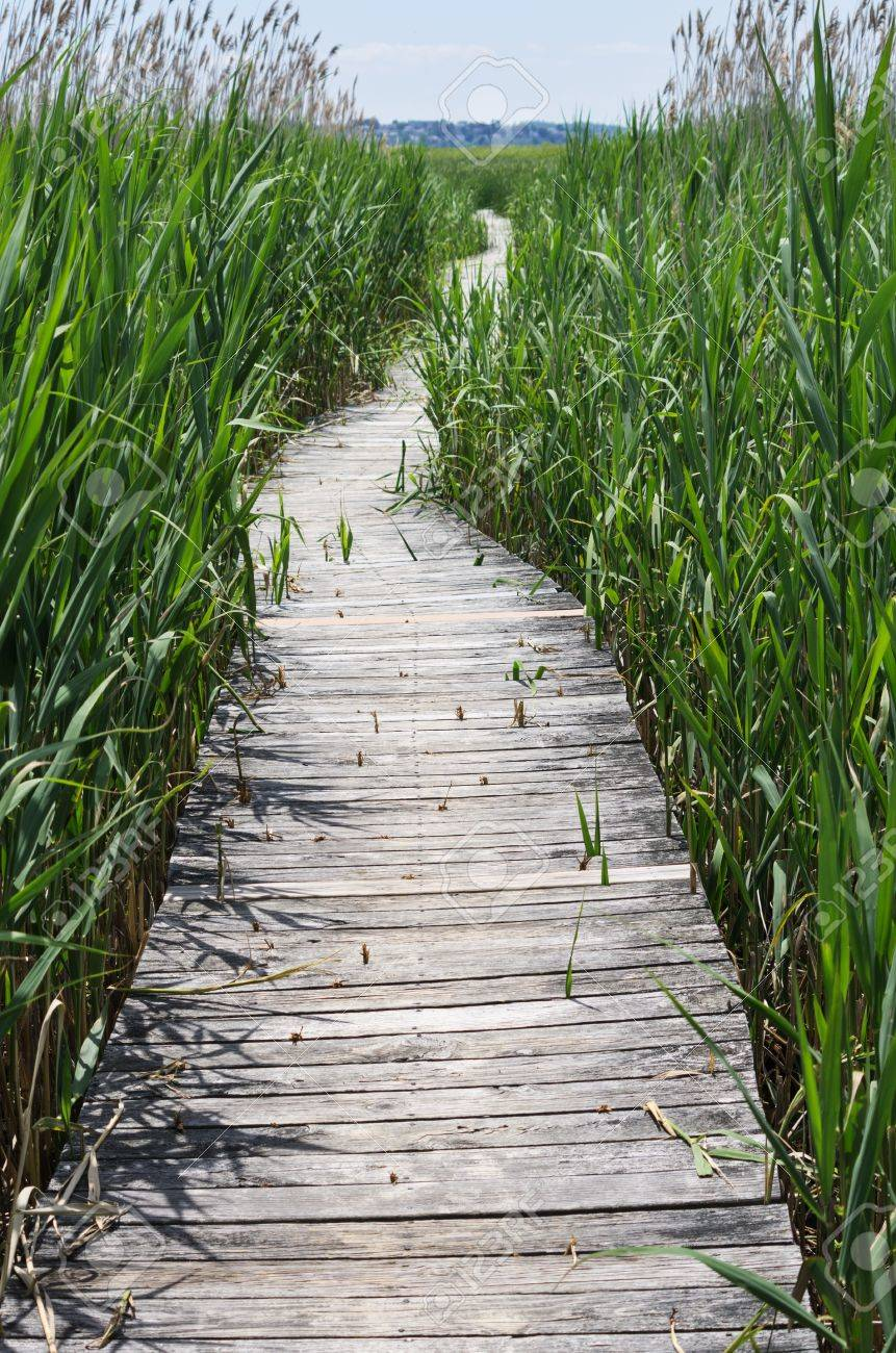 boardwalk trail through a marsh at Plum Island Stock Photo - 21393391