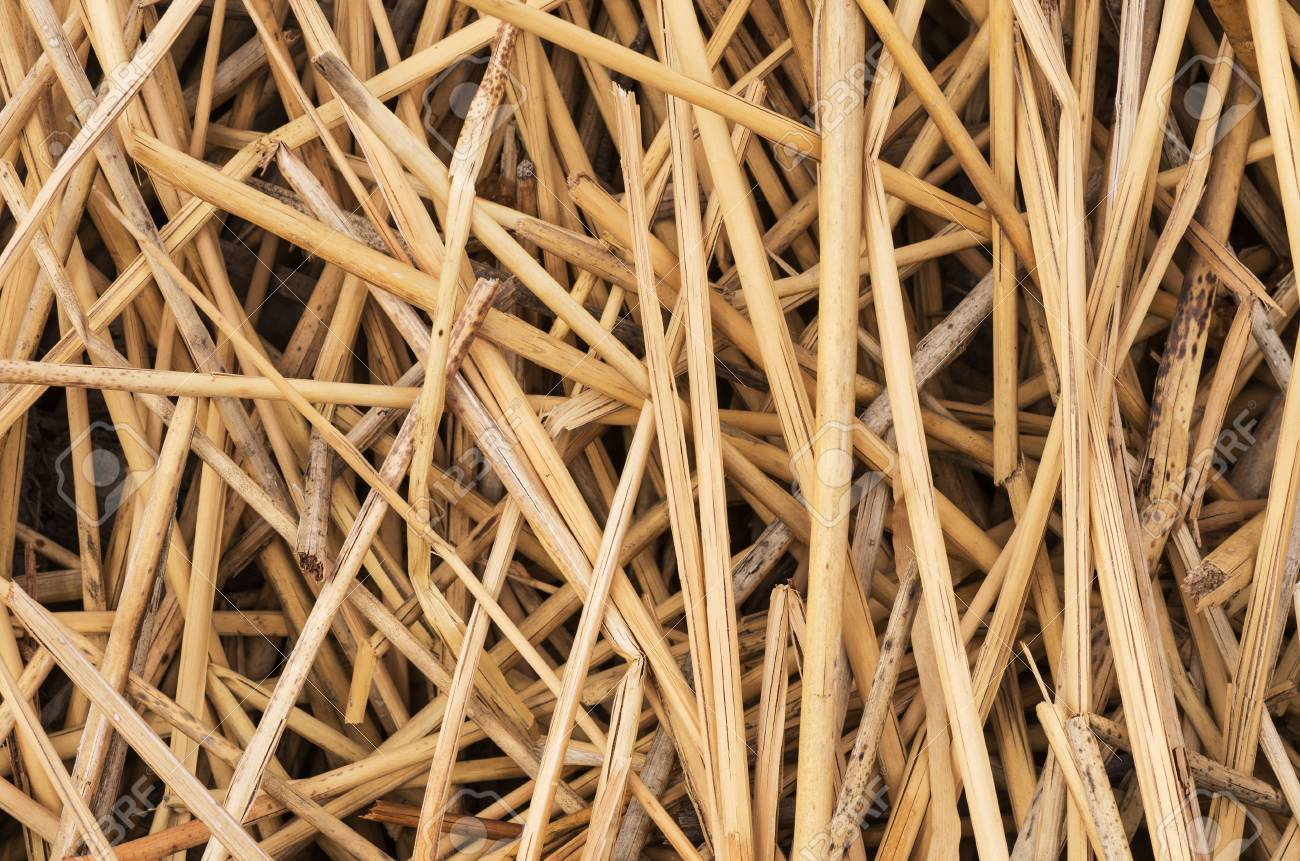 close up image of dead reeds for background texture Stock Photo - 24317059