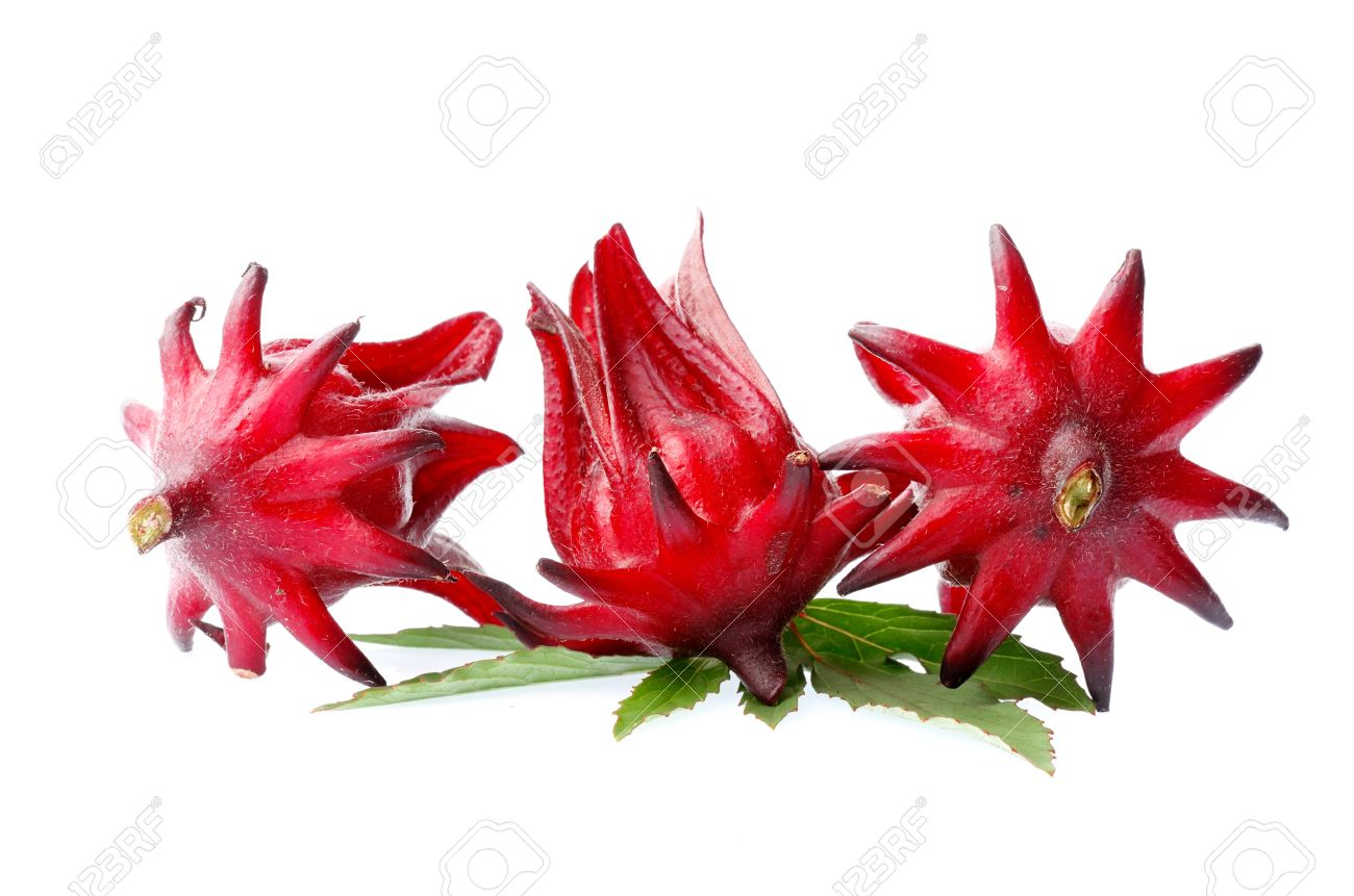 Hibiscus sabdariffa or roselle fruits isolated on white background Stock Photo - 16509837